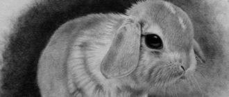 Рисунки животных для срисовки карандашом (40 фото)
