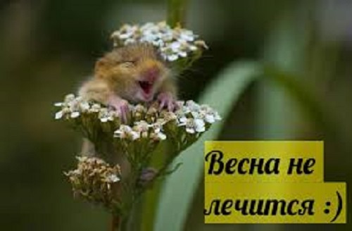 Картинка «Весна не лечится»