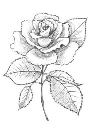 Рисунки цветов для срисовки карандашом (12 фото)