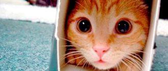 Картинка с котом в коробке