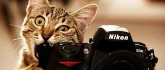 Прикольная картинка с красивым котом фотографом