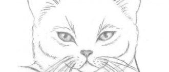 Рисунки кошек для срисовки карандашом (32 фото)