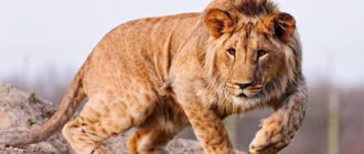 Красивые картинки про диких животных (36 фото)