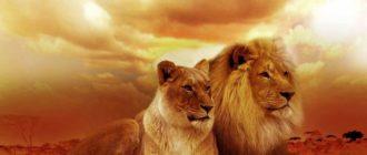 Картинки львы на рабочий стол (36 фото)