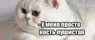 Смешная картинка с пушистой кошкой