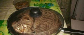 Прикольный кот нашел удобное место для сна на картинке