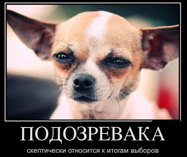 Смешная собака подозревака