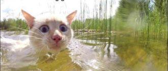 Прикольная картинка про кота с надписью