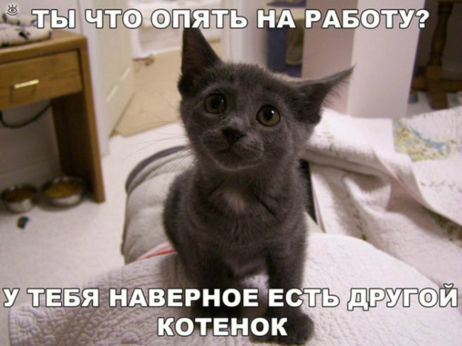 Смешная картинка про ревнивого котенка