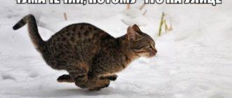 Прикольная картинка про кота зимой с надписью