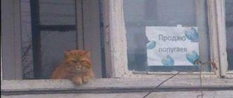 Прикольная картинка про кота и попугаев с надписью