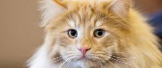 Прикольные картинки про кошек с надписью (36 фото)