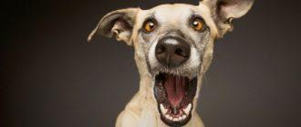 Прикольные картинки про собак с надписью (36 фото)