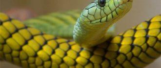 Красивые картинки змей (36 фото)