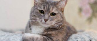 Картинки няшных котиков (36 фото)