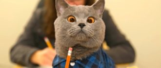 Прикольные картинки котики (36 фото)