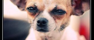 Прикольные картинки «Собака подозревака» (40 фото)