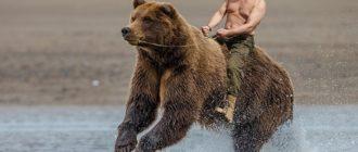 Прикольные картинки медведей (40 фото)