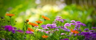 Красивые картинки цветы (40 фото)