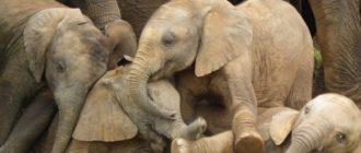 Прикольные картинки про слонов (36 фото)