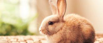 Красивые картинки животных (45 фото)