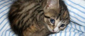 Прикольные картинки про котят скачать (40 фото)