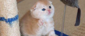 Прикольные картинки про кошек и котят (36 фото)