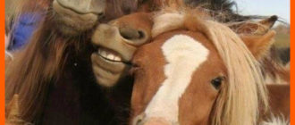 Прикольные картинки про коней (40 фото)