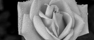 Красивые черно-белые картинки (45 фото)
