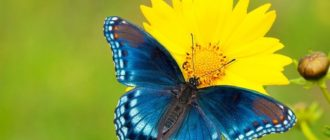 Красивые картинки бабочек (37 фото)
