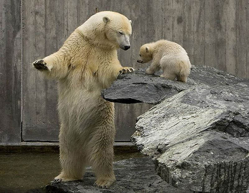 все очень прикольное необычное фото медвежат этих тонких нежных