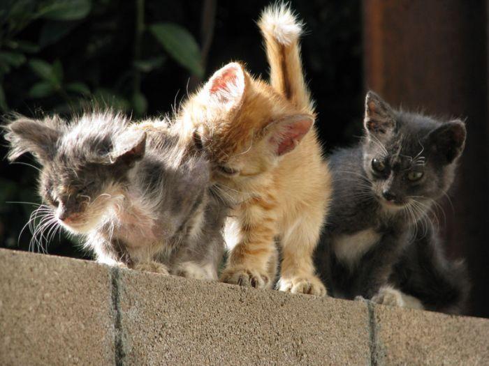 Картинки приколы с котами и котятами