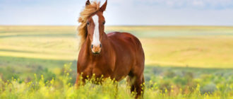 Картинки красивые лошадей (38 фото)