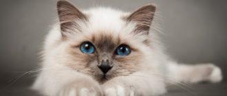 Красивые картинки с котятами (38 фото)