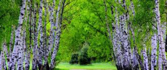 Природа России красивые картинки (36 фото)