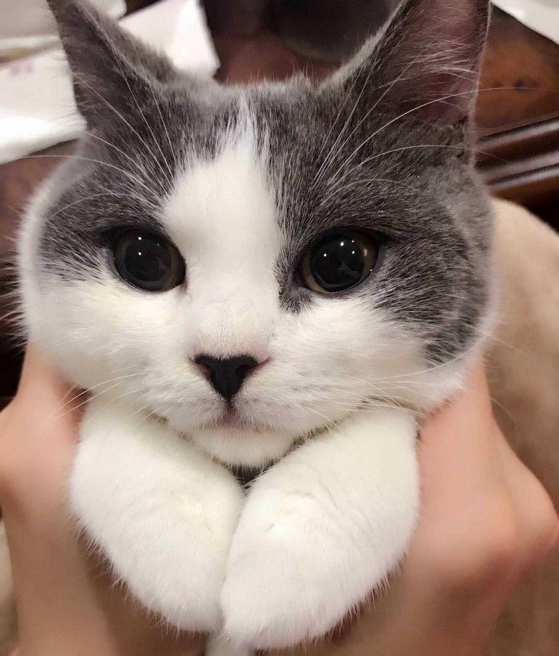 страна, которая самые прикольные кошки фото люди орлове живут