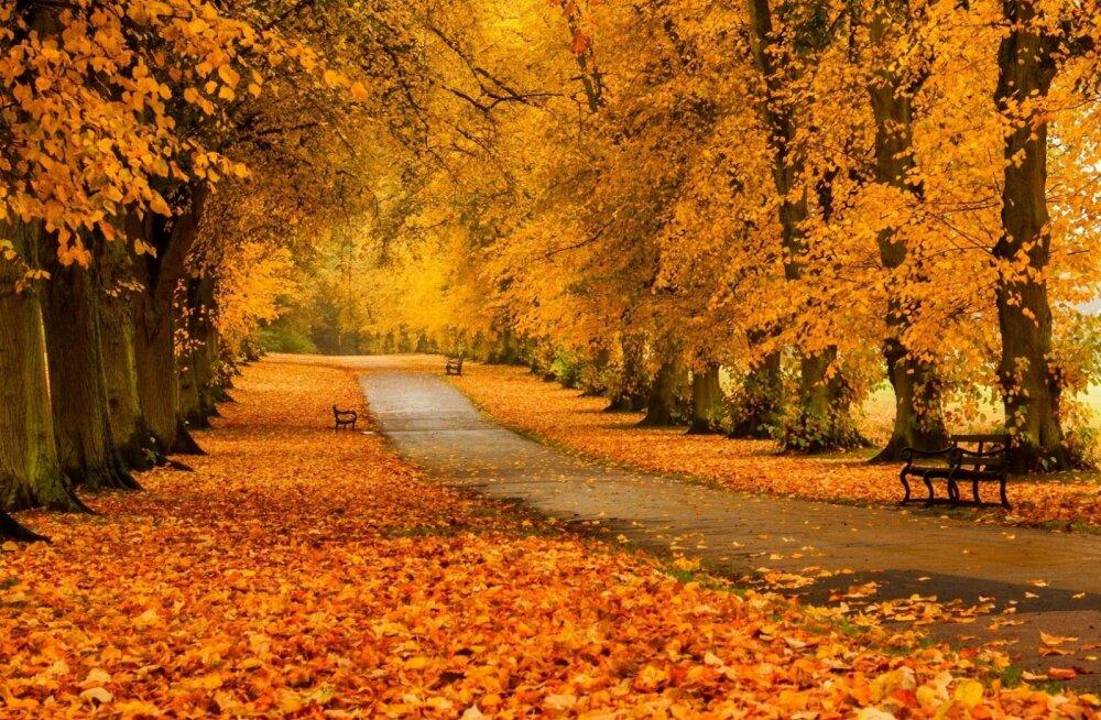 Красивые картинки осень (37 фото) • Развлекательные картинки