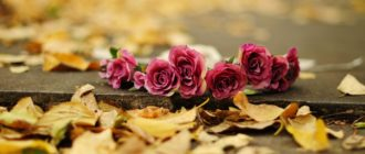 Красивые картинки осень (37 фото)