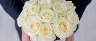 Картинки белые розы красивые (39 фото)
