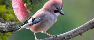 Красивые картинки с птицами (36 фото)
