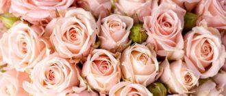 Картинки красивые цветы на рабочий стол (43 фото)