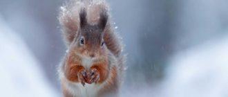Красивые картинки зима на рабочий стол (46 фото)