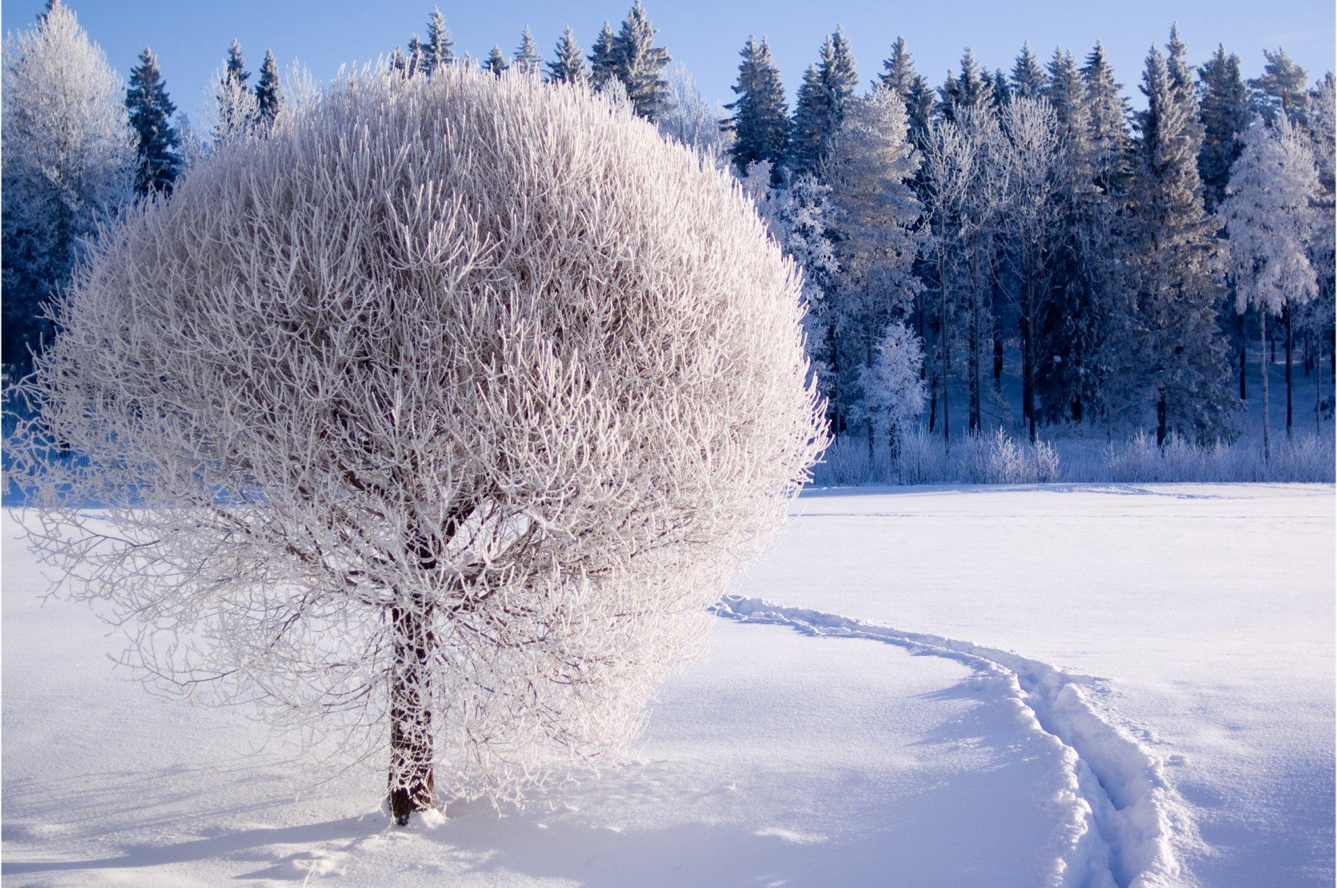картинка зима метельная вам