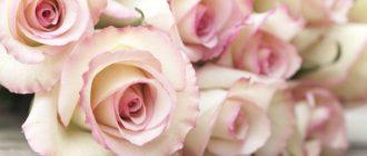 Красивые картинки с цветами 1366х768 (40 фото)
