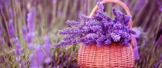 Картинки с полевыми красивыми цветами (35 фото)