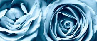 Красивые картинки большие розы на весь экран на рабочий стол (37 фото)