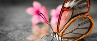 Красивые картинки с бабочками и цветами (37 фото)