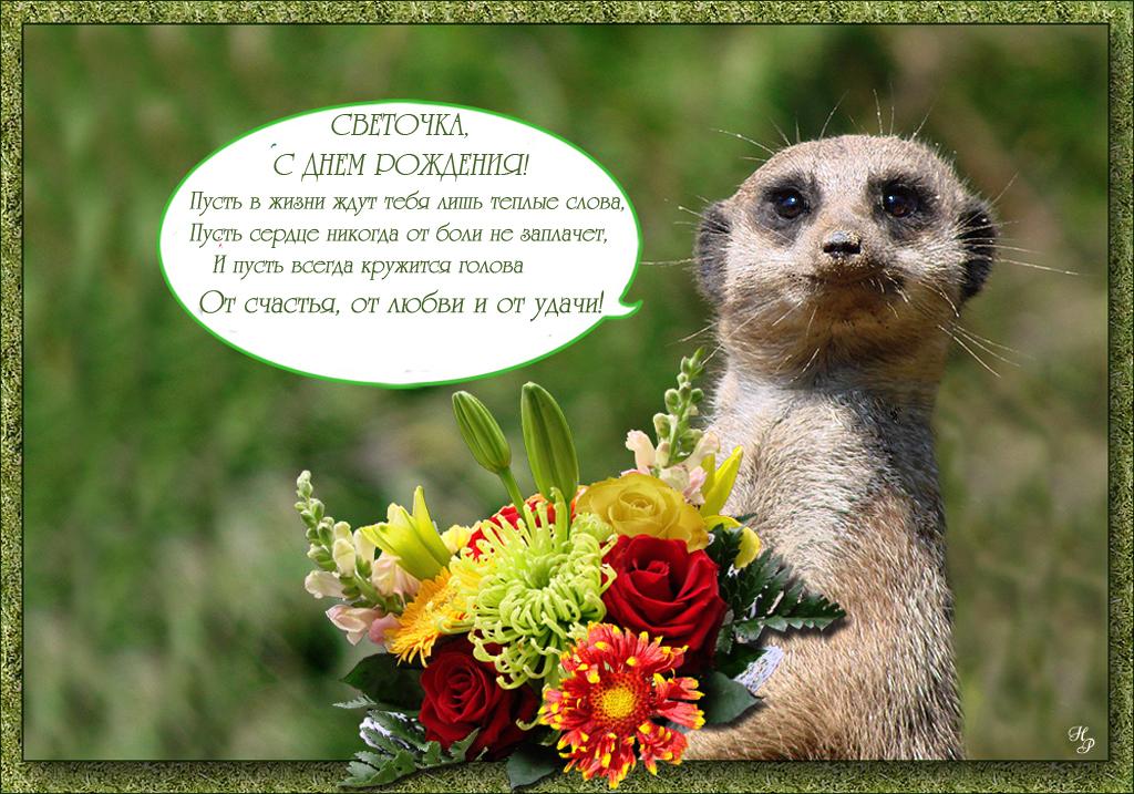 Дружбу открытки, поздравления с днем рождения подруге в картинках с именем света