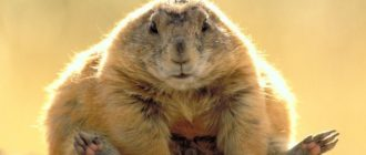 Самые красивые картинки в мире животных (37 фото)