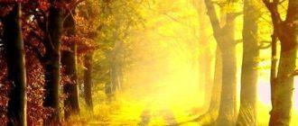 Красивые картинки на телефон с природой (36 фото)